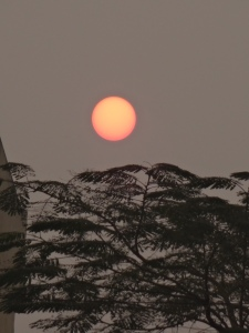 Sun rises behind the trees @http://agileopedia.com/