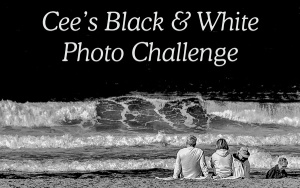 black-white-banner
