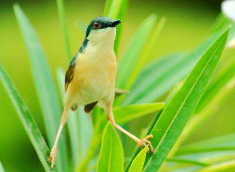 bird_balancing_act